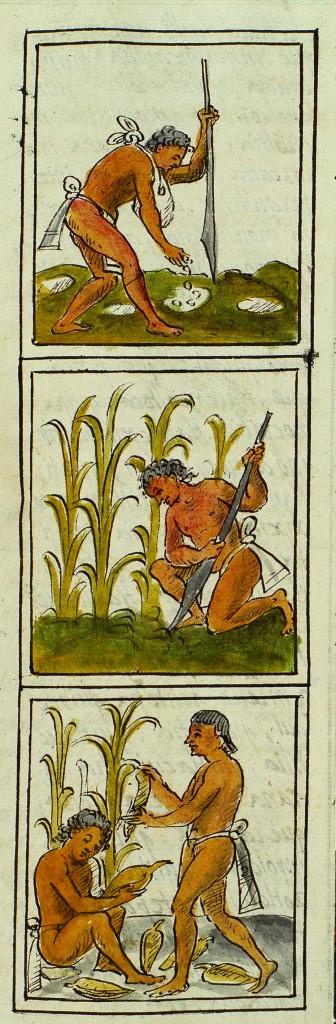 wikimexico